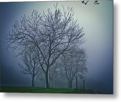 Forest Mist Metal Print by Jason Naudi Photography