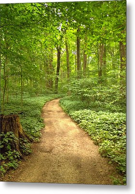 Metal Print featuring the photograph Forest Path by Coby Cooper