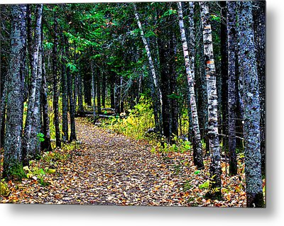Forest Path In Autumn Metal Print by Matthew Winn