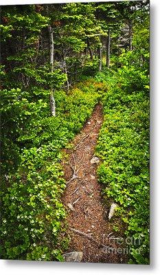 Forest Path In Newfoundland Metal Print by Elena Elisseeva