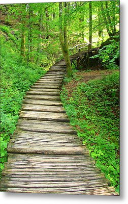 Metal Print featuring the photograph Forest Path by Ramona Johnston