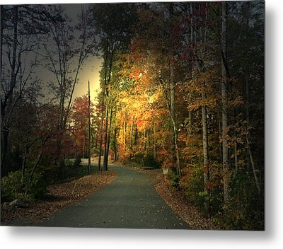 Metal Print featuring the photograph Forest Road 2 by Elizabeth Coats