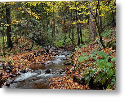 Forest Stream In Autumn Metal Print by Stephen  Vecchiotti