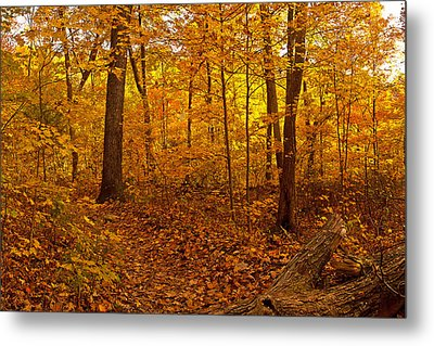 Forest Trail Metal Print by Ulrich Burkhalter