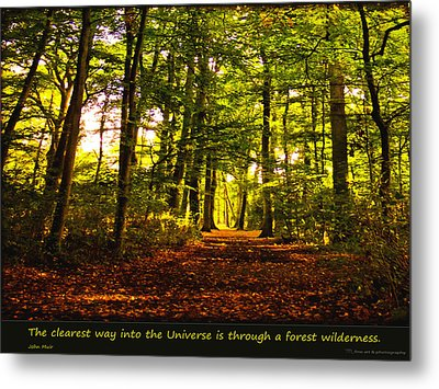 Forest Wilderness Metal Print by Yvon van der Wijk