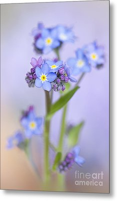 Forget-me-not Spring Metal Print by Jacky Parker