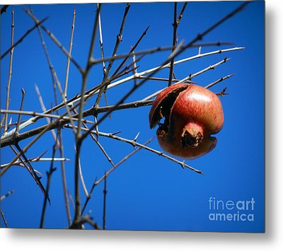 Forgotten Pomegranate  Metal Print by Alexandra Jordankova