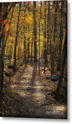 Forrest Of Gold Metal Print
