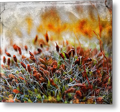 Forrest Of Moss Metal Print