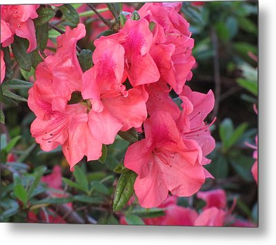 Metal Print featuring the photograph Fort Worth Botanical Gardens Springtime by Shawn Hughes
