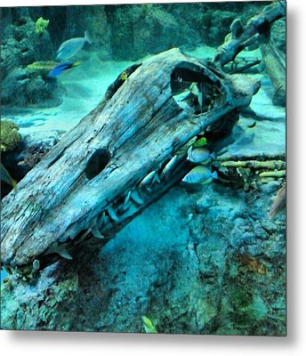 #fossil #hdr #hdr_lovers #creation Metal Print by Kel Hill