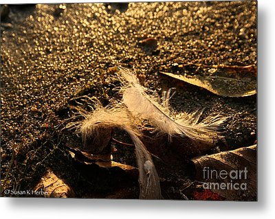 Found Feathers Metal Print by Susan Herber