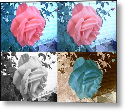 Four One Rose Metal Print
