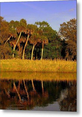 Four Palms Reflecting In Myakka Lake Metal Print