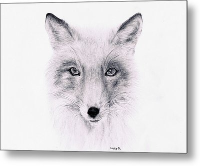 Metal Print featuring the drawing Fox by Lucy D