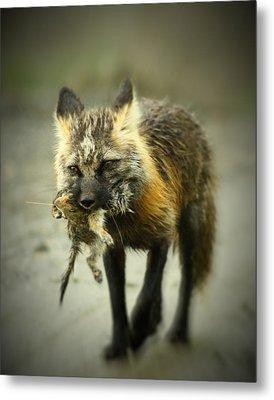 Foxes Dinner Metal Print