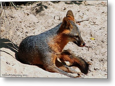 Foxie Metal Print by Debra Forand