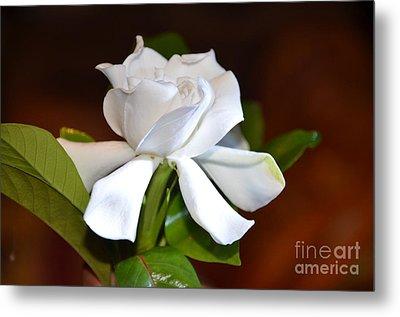 Fragrant Flower Metal Print by Jiss Joseph