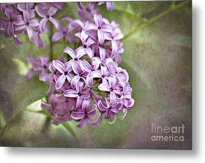 Fragrant Purple Lilac Metal Print by Cheryl Davis