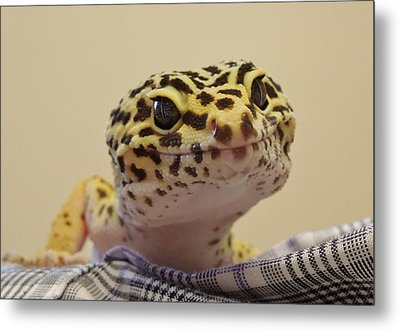 Freckles The Smiling Leopard Gecko Metal Print by Chad and Stacey Hall