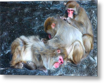 Free Buffet And Grooming Metal Print by Sarah McKoy