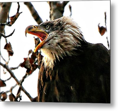 Freedom Is Not Free Metal Print by Carrie OBrien Sibley