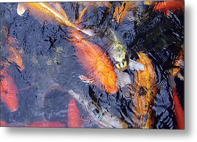 Metal Print featuring the photograph Frenzy by Dan Menta