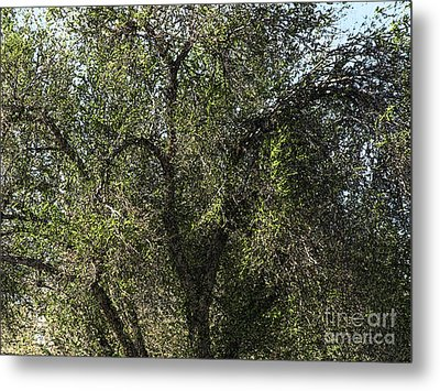 Fresco Tree Metal Print