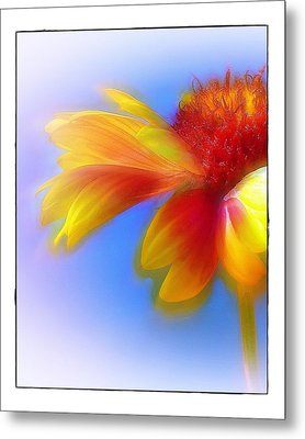 Metal Print featuring the photograph Fresh As A Daisy by Judi Bagwell