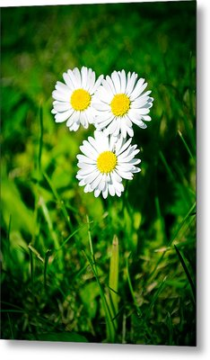 Friendly Daisy Metal Print by Ruth MacLeod