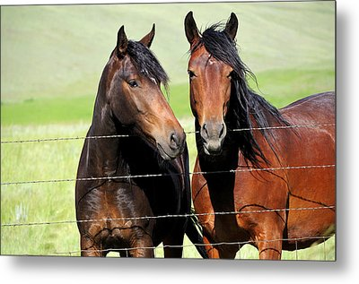 Metal Print featuring the photograph Friends by Fran Riley