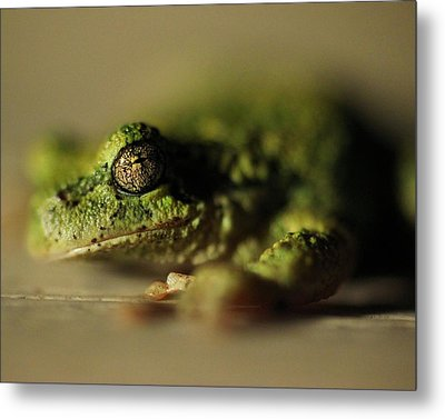 Frog Eyes Metal Print by Leigh Edwards
