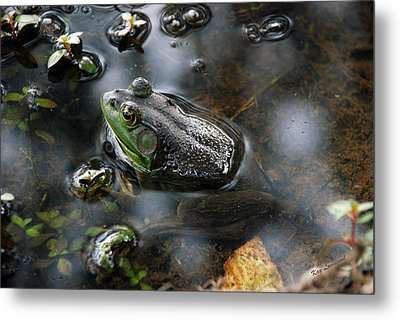 Frog In The Millpond Metal Print by Kay Lovingood