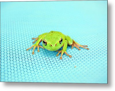 Frog Italy Metal Print by Rhys Griffiths Photography