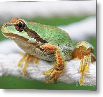 Frog On A Rope Metal Print by Billie-Jo Miller