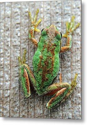 Frog On Wall Metal Print by Billie-Jo Miller