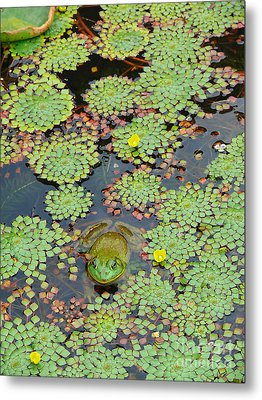 Metal Print featuring the photograph Frog Pond by Jeanne  Woods