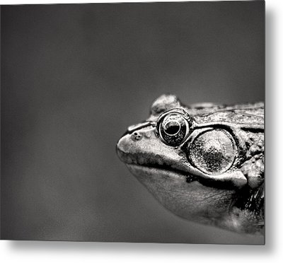 Frog Portrait Metal Print by Cappi Thompson