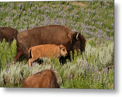 Frontier Family Metal Print by Bob Bahlmann
