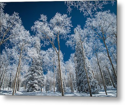 Frost And Snow Covered Trees, Colorado Metal Print by Karen Desjardin