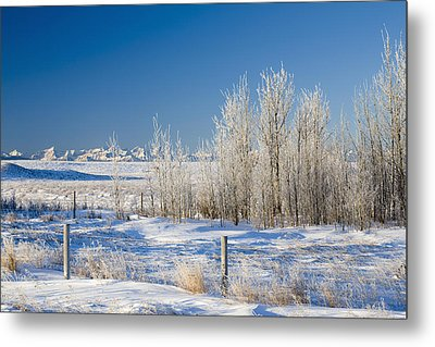 Frost-covered Trees In Snowy Field Metal Print by Michael Interisano