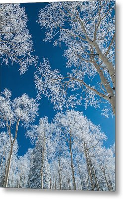 Frost Covered Trees On A Cold, Winter Day Metal Print by Karen Desjardin