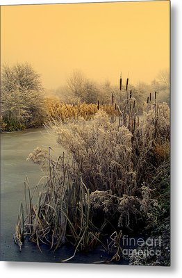 Frost Metal Print by Linsey Williams