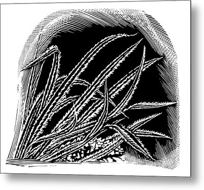 Frost On Blades Of Grass, Woodcut Metal Print by Gary Hincks