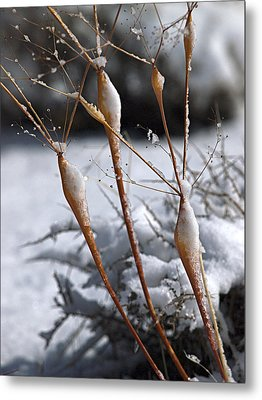 Frosted Trumpets Metal Print by Joe Schofield
