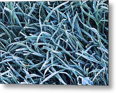 Frosty Grass Metal Print by Elena Elisseeva