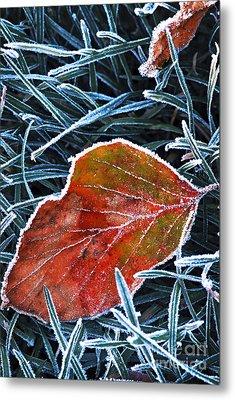 Frosty Leaf Metal Print by Elena Elisseeva