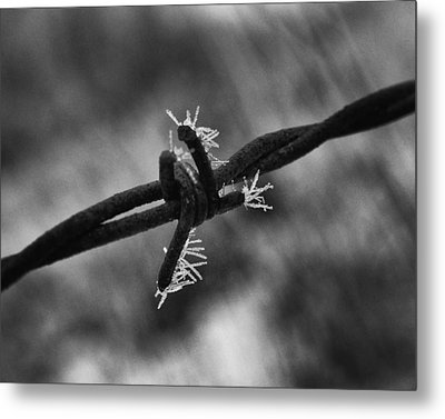 Metal Print featuring the photograph Frosty Thorn by Coby Cooper
