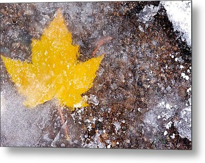 Metal Print featuring the photograph Frozen Leaf by Scott Holmes