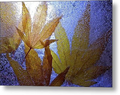 Metal Print featuring the photograph Frozen Leaves by Scott Holmes